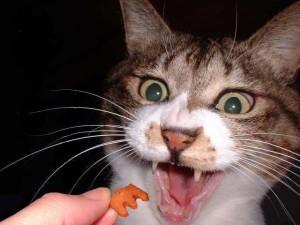 Chov mačky bez možnosti výbehu  71109faa91c